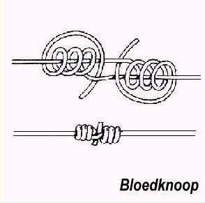 bloedknoop